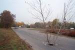 дерево на дороге 4