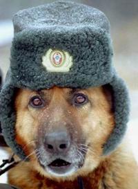 собака шапка