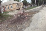 snapshot20120527091656