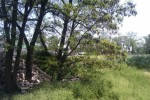 IMAG0632